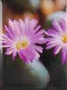 Mini album pre 100 fotiek 10x15 One Color 1