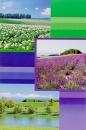 Fotoalbum 9x13 pre 300 fotografií Euphoric Levandule