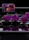 Fotoalbum 10x15 pro 300 fotografií  Essencial fialový