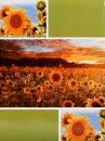 SAMOLEPIACE album 40 strán Sunrise zelený