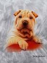 SAMOLEPÍCÍ album 40 stran Doggy 2 béžový pes