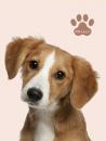 Mini album pre 100 fotiek 10x15 Plush 2 pes hnědý