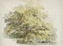Boomstudie 50x70cm -Roth George Andries