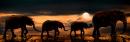 Sloní panorama - foto na plátně 30x90 cm