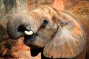 Slon pro štěstí - foto na plátně 50x80 cm