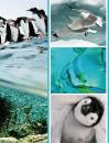 Fotoalbum 10x15 pro 300 fotek Fauna 1