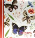 SAMOLEPÍCÍ album 100 stran DRS50 Butterflies světlé