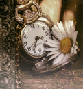 SAMOLEPIACE album 100 strán DRS50 Time kopretina