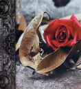 SAMOLEPÍCÍ album 100 stran DRS50 Time růže