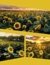 Fotoalbum 9x13 pre 200 fotiek Native okrový