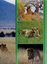 Fotoalbum 10x15 pro 300 fotografií Etno zelený