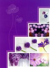 Minialbum 9x13 pre 36 fotiek   Pastel Vase fialový