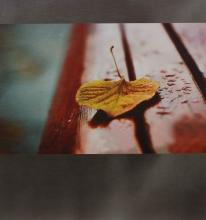 SAMOLEPIACE album 100 strán - DRS50 Leaf šedé