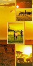 Album 10x15 pre 96 fotiek Savanna kôň