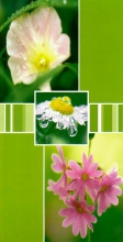 Album 10x15 pre 96 fotiek Stigma zelené