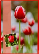 Fotoalbum 10x15 pre 200 fotografií Flower červené