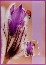 Fotoalbum 10x15 pre 200 fotografií Flower  fialové
