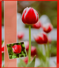 Fotoalbum 10x15 pre 500 fotiek Flower red