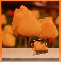 Fotoalbum 10x15 pre 500 fotiek Flower yellow