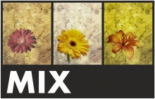 Minialbum 10x15 pre 36 fotek Vellum MIX