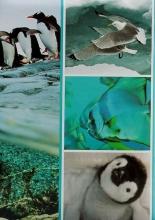 Fotoalbum 9x13 pre 200 fotografií Fauna 1 tučňiak