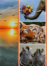 Fotoalbum 9x13 pre 200 fotografií Fauna 2 tiger