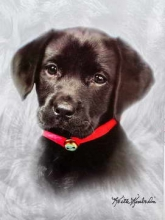 SAMOLEPIACE album 40 strán Doggy 1 čierný pes