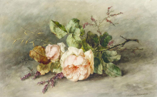 Růže 50x80cm - Margaretha Roosenboom