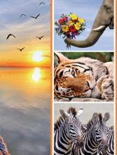Fotoalbum 10x15 pre 300  fotiek Fauna 2