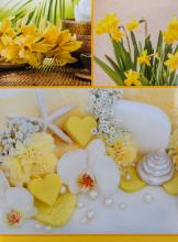 Fotoalbum 10x15 pro 300 fotografií  Aloe žltý