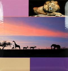 Klasické fotoalbum 60 stran DISCOVERY lev