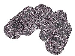 CELESTRON UpClose G2 7x35