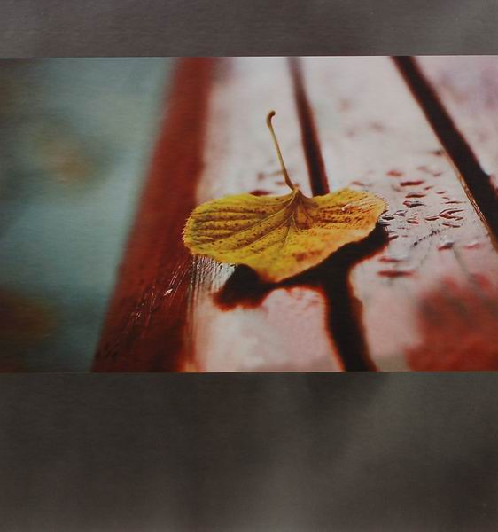 SAMOLEPÍCÍ album 100 stran -DRS50 Leaf šedé