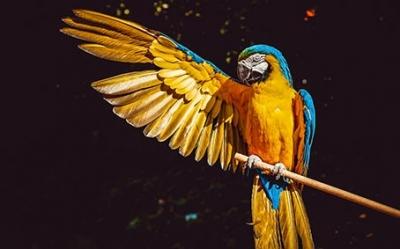 Fotenie zvierat - voľná príroda